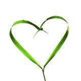 Coeur avec des lames d'herbe, écologie Photographie stock