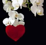 Coeur blanc d'orchidée et d'amour Image stock