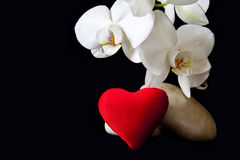 Coeur blanc d'orchidée et d'amour Photographie stock