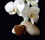 Coeur blanc d'orchidée et d'amour Photos stock