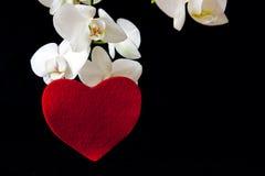 Coeur blanc d'orchidée et d'amour Images libres de droits