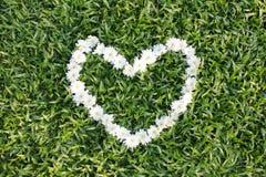 Coeur blanc fait à partir des fleurs de marguerite Image libre de droits