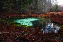 Coeur bleu de forêt foncée image libre de droits