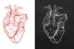 Coeur, coeur naturel, coeur de croquis Photographie stock libre de droits