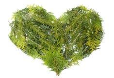 coeur conifére d'arbres de Noël d'isolement Photos stock