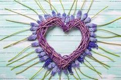 Coeur décoratif et fleurs bleues de muscaries Images stock