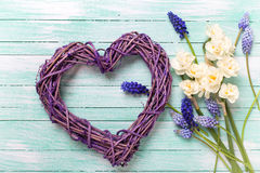 Coeur décoratif et muscaries et fleurs bleus de jonquilles sur t Photographie stock libre de droits