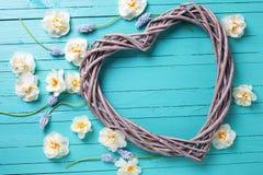 Coeur décoratif et narcisse blanc et muscarie de ressort frais Image stock