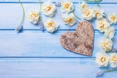Coeur décoratif et narcisse blanc et muscarie de ressort frais Image libre de droits