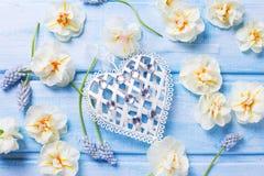 Coeur décoratif et narcisse blanc et muscarie de ressort frais Photo stock