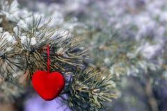 Coeur décoratif sur la branche couverte de neige de sapin Carte de jour de Valentine Image stock