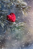 Coeur décoratif sur la branche couverte de neige de sapin Carte de jour de Valentine Photos libres de droits