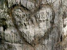 Coeur découpé dans l'écorce d'arbre Photos stock