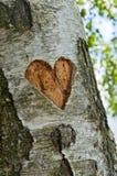 Coeur découpé dans l'arbre Photos libres de droits