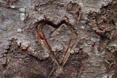 Coeur découpé dans l'arbre Photo libre de droits