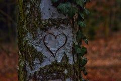 Coeur découpé dans un arbre Photographie stock