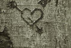Coeur découpé dans un arbre Image stock
