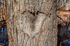 Coeur découpé dans un arbre Photos stock