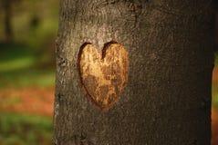 Coeur découpé sur un arbre Photo libre de droits