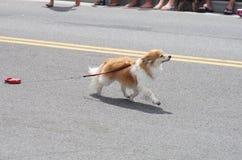 COEUR D ALENE, IDAHO 6-4-2014: 4to del desfile de julio en el d céntrico Alene de Coeur Imagenes de archivo