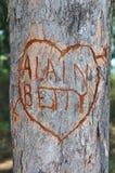Coeur d'amour avec le message dans un arbre Images stock