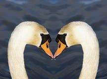Coeur d'amour de cygnes Images libres de droits