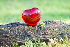 Coeur d'amour de jour de valentines avec la lumière du soleil dehors Photographie stock libre de droits