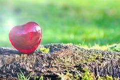 Coeur d'amour de jour de valentines avec la lumière du soleil dehors Images libres de droits
