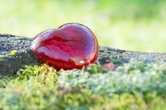 Coeur d'amour de jour de valentines avec la lumière du soleil dehors Photos libres de droits