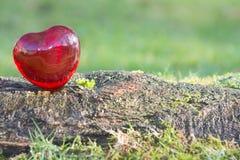 Coeur d'amour de jour de valentines avec la lumière du soleil dehors Image stock