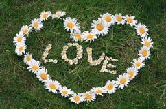 Coeur d'amour de marguerite Photo libre de droits