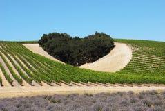 Coeur d'amour de vin image libre de droits