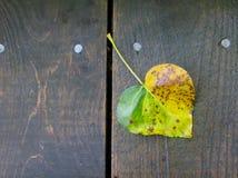 Coeur d'automne Photographie stock