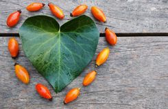 Coeur d'automne Photo libre de droits