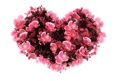 Coeur d'orchidée Image libre de droits
