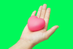 Coeur dans des mains d'isolement sur le fond vert de clé de chroma d'écran Photographie stock