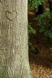Coeur dans l'arbre de croûte Image libre de droits