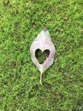 Coeur dans la feuille sur la mousse images stock
