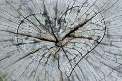 Coeur dans le tronc en coupe Photos stock