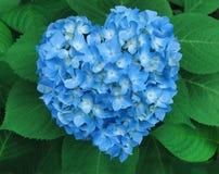 Coeur de bleu de Valentine photos libres de droits