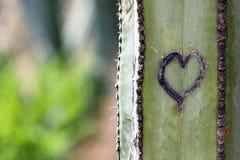 Coeur de cactus Photo libre de droits
