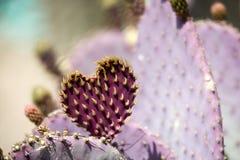 Coeur de cactus Photos libres de droits