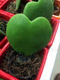 Coeur de cactus photos stock