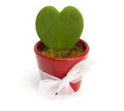 Coeur de cactus dans un pot rouge Images libres de droits