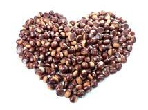 Coeur de châtaigne Image stock