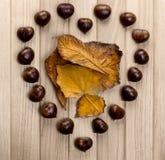 Coeur de châtaignes Image libre de droits