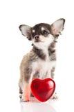 Coeur de chien d'isolement sur l'amour blanc de fond Image stock