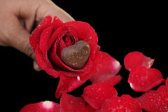 Coeur de chocolat et rose de rouge Photographie stock