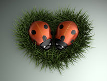 Coeur de coccinelles Photos stock