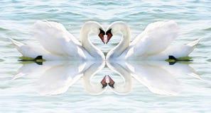 Coeur de cygne images stock